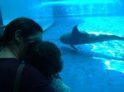 guardiamo i delfini che ci vengono a salutare
